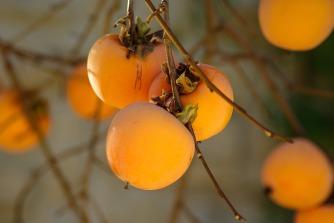 fruit-1065727_1920