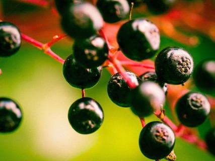 berries-949061_1920(1)